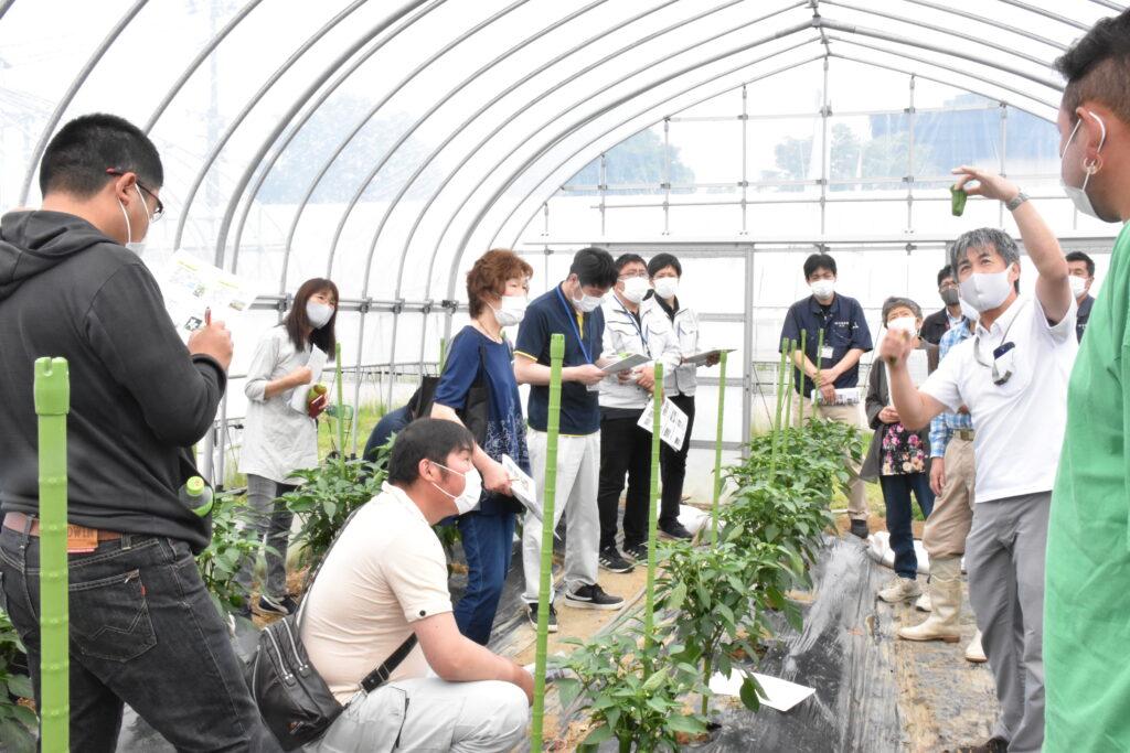 タキイ種苗株式会社奥原課長(右)からピーマンの栽培管理について説明を受ける生産者(左)