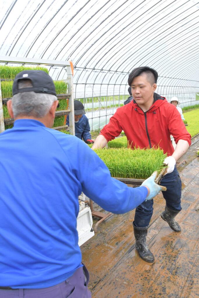 苗の積み込みを行う新採用職員(右)